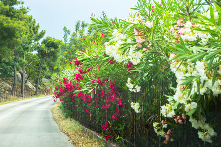 curve of poor visibility with many beautiful flowers on the side