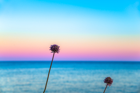 two flowers in front of a pastel sky and a calm sea Stock Photo