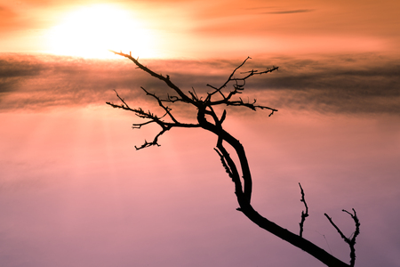empty black branch stretching towards the sun in a beautiful sky