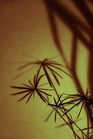 little scary but beautiful shadows of plants on a white stone wall Stock Photo