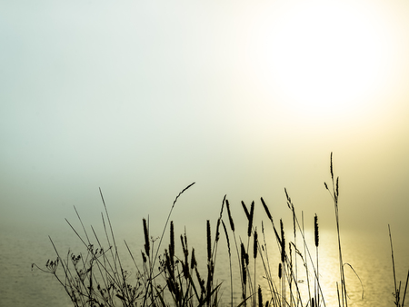 beautiful morning fog over a lake with grass in the foreground