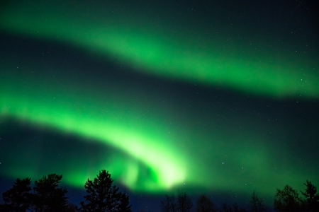 green aurora borealis above the tree tops on a starry sky in the north of Sweden
