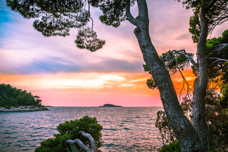 HDR image with pine trees leaning towards the sea in front of sunset in Croatia Stock Photo