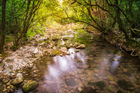 springwater: beautiful picture of a gently flowing creek with springwater in the forest Stock Photo
