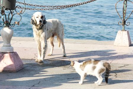 Hund und Katze Begegnung