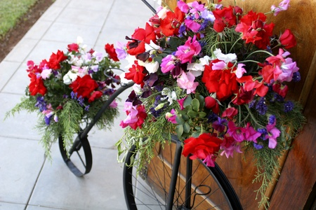 Ornamental bicycle with colorful sweet pea floral arrangement