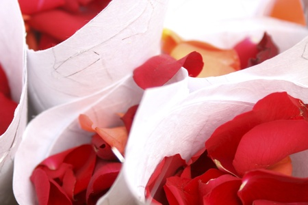 fresh red rose petal confetti