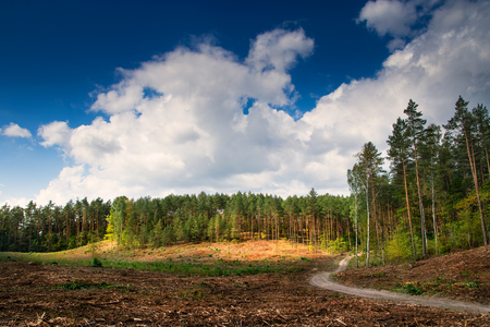 clearing the path: Path winding through the forest cut Stock Photo