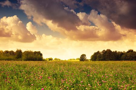 masuria: Countryside meadow covered with alfalfa. Masuria, Poland.