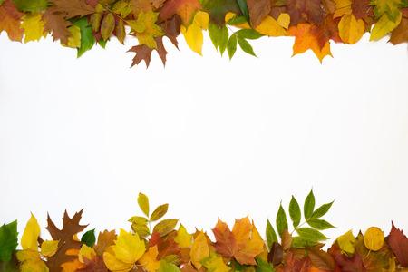 hojas secas: Superior e inferior fila de hojas sobre un fondo blanco. Foto de archivo