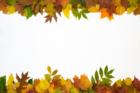 Top and bottom row of leaves on a white background.