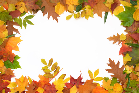 golden border: leaves frame on a white background. Stock Photo