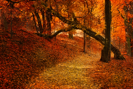 masuria: Pathway covered with leaves  through the autumn forest. Masuria, Poland.