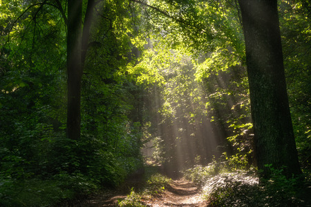 clearing the path: forest path lit by the rays of the sun Stock Photo