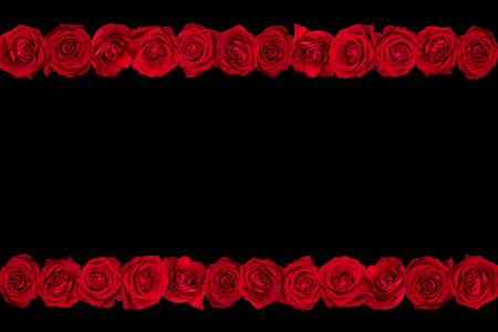 arranged: red roses arranged in lines. Black background. Stock Photo