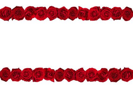 margins: Red roses arranged in lines. White background.