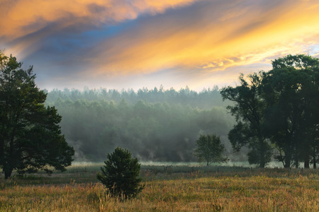 rises: Beautiful countryside landscape on dawn. Sun rises over pines Stock Photo