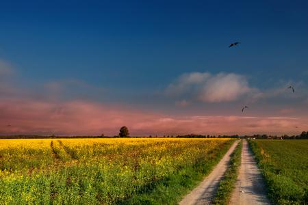 masuria: The road leading through the rape fields. Masuria, Poland.