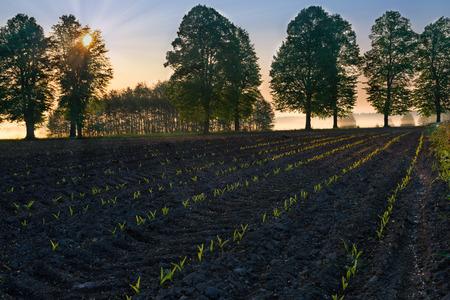 masuria: Spring countryside landscape. Sun riser over  new, green field. Masuria,. Poland.