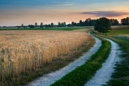 masuria: Summer landscape with country road and fields of wheat. Masuria, Poland.