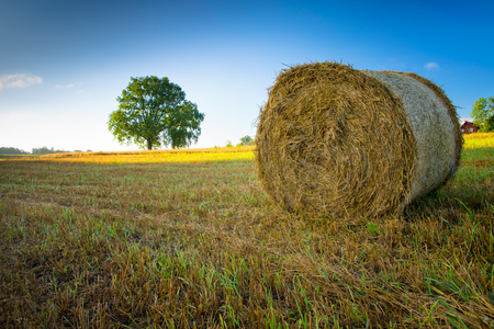 Haystack on a field of stubble. August countryside landscape. Stock Photo