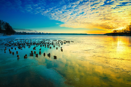 swimm: The sun sets over the surface of the ice. Winter colorful  landscape with resting birds. Masuria, Poland. Stock Photo