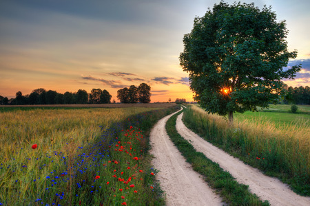 Summer landscape with country road and fields of wheat. Masuria, Poland.