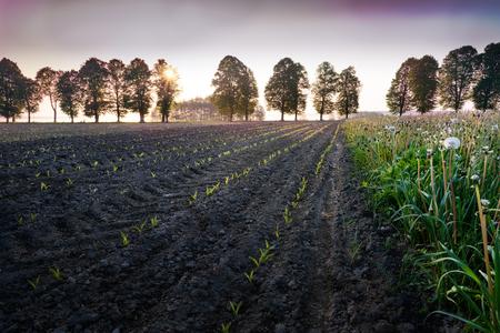 Sun riser over newly sown corn field. Masuria, Poland.