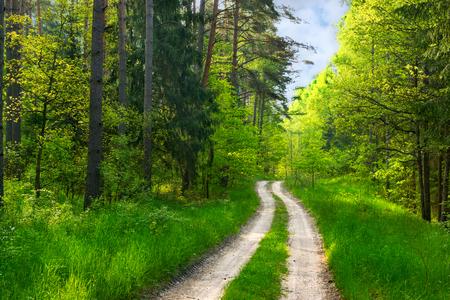 Forest path among green wood. Masuria, Poland.