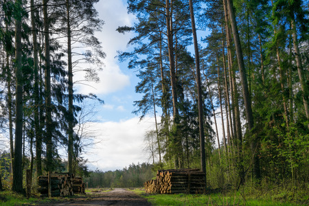 Forest path among the trees. Masuria, Poland.