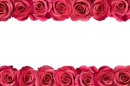Pink roses arranged in two lines. White background.