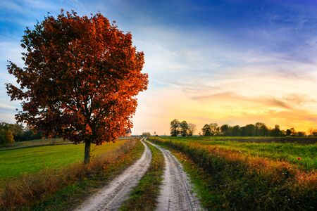Autumn landscape with country road and red tree. Masuria, Poland.