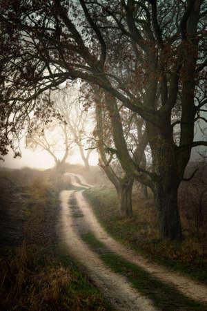 Dirt winding road among oaks. November 2020. Masuria, Poland. Stok Fotoğraf