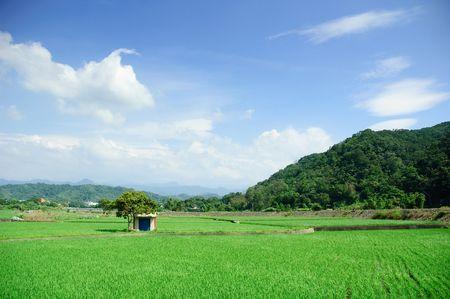 It is beautiful farm in taiwan Stock Photo