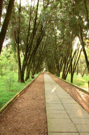 pedestrian road  in forest