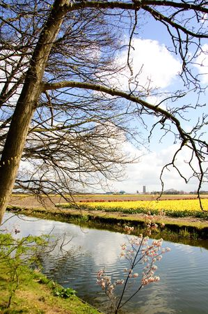 tulip farm near river in Netherlands