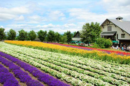 champ de fleurs � Hokkaido au Japon
