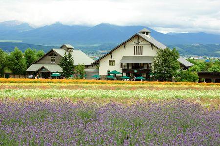 lavender field in Hokkaido in Japan Stock Photo