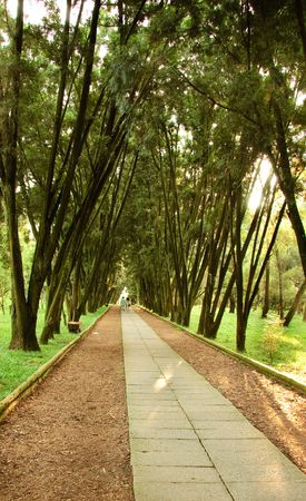 walking road in the park for relaxing   Stock Photo