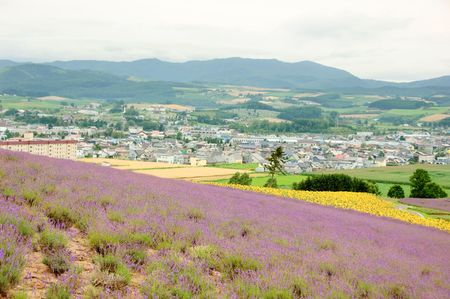 lavender field and  city Stock Photo - 6149175