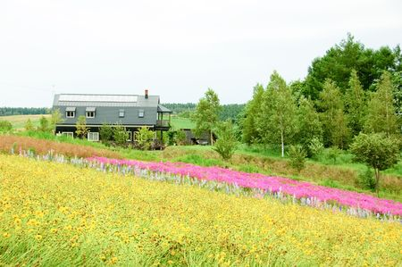 flower field and farmhouse