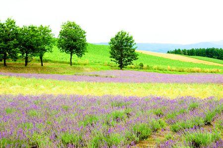 champ de fleurs color�es dans le Japon.