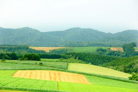 different color farmland in Hokkaido in Japan photo