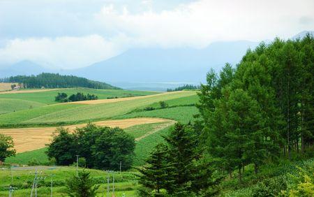 rainy meadow and farm