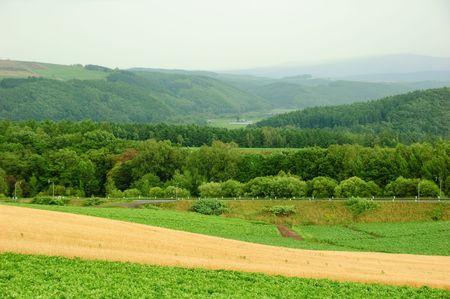 rainy farm and forest
