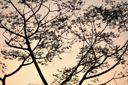 silhouette of tree photo