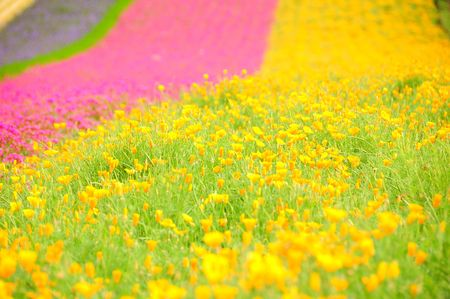 colorful flower field photo
