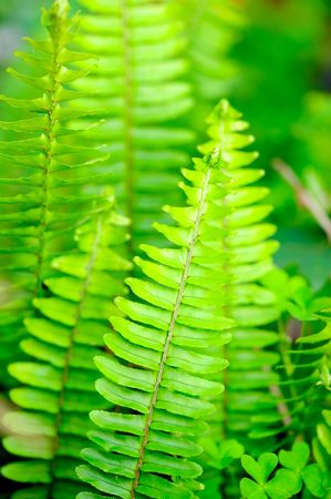 vertical fern photo