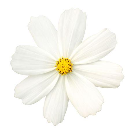 cmsmos blanc isol�es  Banque d'images