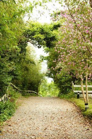 une passerelle avec sc�ne magnifique dans le parc